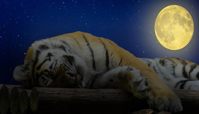Good Night Gif Funny